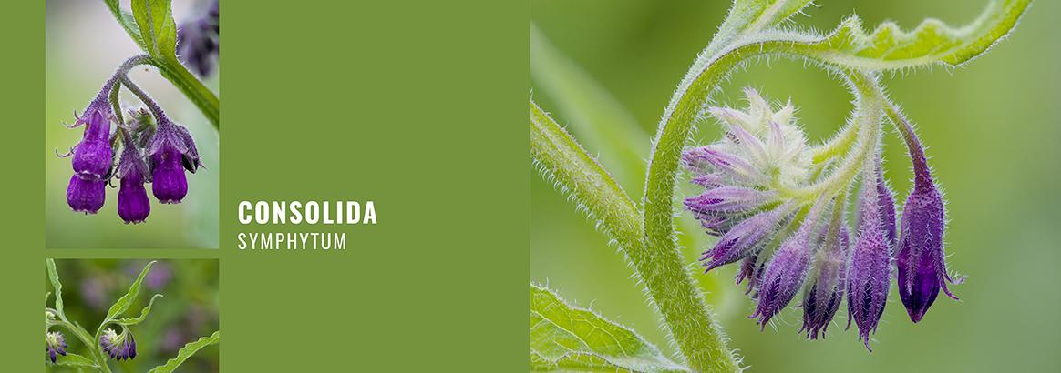 Heilpflanzenanbau